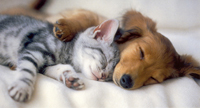 Kitten_and_puppy_sleeping[1]