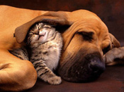 dogs-and-cats10[1]