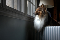 dog_by_window_2